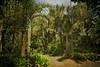 A walk through the Sydney Botanic Gardens. Textures courtesy of Textures-Lenab-Anna J. & Shadow House Creations. (TOXTETH L8) Tags: plants textures zones subtropical sydneybotanicalgardens warmtemperate