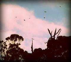 aullando bosques (Felipe Smides) Tags: selva bosque valdivia valdiviana húmeda smides felipesmides