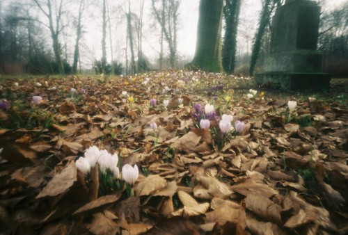 Blumenlaubwiese