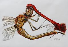 "Artwork ""Darters Mating"" 2015 (Wild Chroma) Tags: dragonfly pair drawing darter illustration insects letraset tria promarker art artwork wildlife animal sympetrumvulgatum"