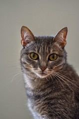 Micia (ansacariofoto) Tags: cats animals cat gatti animali tokina100mmf28atxprod nikond5000
