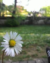 emozioni (dennydomine) Tags: sensazioni contrasto life love flowers simplethings