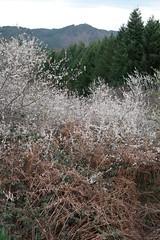 Toutes les nuances de la nature (OpiTwitt) Tags: couleurs paysage arbre
