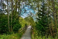 07-02-2016-Maplewood Flats Conservation (Valerie Sauve-Vancouver) Tags: park nature outdoors hike trail brigde maplewoodflats northvancouverbc