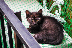 Today's Cat@2016-07-09 (masatsu) Tags: cat pentax catspotting mx1 thebiggestgroupwithonlycats