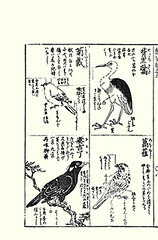 Top left, right  goldcrest, oriental stork?; Bottom left, right  common hill myna, black-faced bunting (Japanese Flower and Bird Art) Tags: bird art japan japanese book hill picture regulus hayashi oriental common stork kano woodblock goldcrest bunting religiosa myna blackfaced emberizidae ciconia emberiza regulidae ciconiidae sturnidae gracula spodocephala boyciana readercollection moriatsu