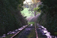 Wibbly Wobbly! (Eddie the Explorer) Tags: green abandoned overgrown train bush tracks railway bent buckled
