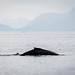 IWR-Juneau-090716 (24)