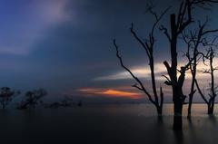 fading away (Dingo photography) Tags: nikon d5100 1855mm kitlens sun sunset beach coastal sea tree trees silhouette sky goldenhour kenalang selangor dingophotography timelessframes