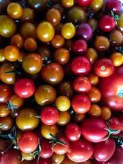 tomatoes_2574 (1) (EYEsnap_Photography) Tags: tomatoes garden livermore red fruit