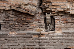torre argentina cat sanctuary (washingtonydc) Tags: italy europe italia rome roma cat ruins ancientrome