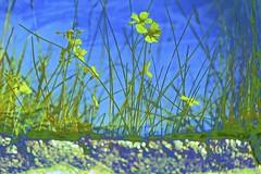 Water Feature #20 (maginoz1) Tags: waterfeature reflection flora flower abstract art contemporaryart bulla melbourne victoria australia winter july 2016 canon g3x