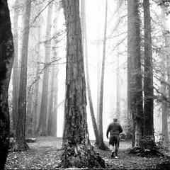 (-Alberto_) Tags: hasselblad500cm reedwoods fog kodaktrix400 120film blackandwhite california carlzeiss nature 6x6