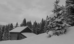 pf (10)-600 (luna_magdalenae) Tags: le froid alpes montagnes neige sallanches megve combloux mont blanc