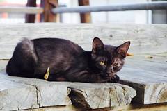 Today's Cat@2016-09-03 (masatsu) Tags: cat thebiggestgroupwithonlycats catspotting pentax mx1