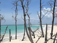 Manglares (raquelpastor) Tags: cayo cayolevisa levisa pinardelro palmarubia beach paradise paraso playa arenablanca virgen cuba travelling backpackers mochileros experience turismo livestyle