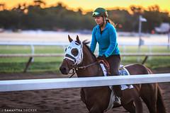 Morning at the Oklahoma Track (Samantha Decker) Tags: canonef135mmf2lusm canoneos6d ny nyra newyork oklahomatrack samanthadecker saratogasprings horse morning upstate