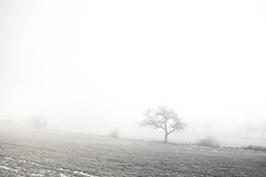 a slight taste of the coming winter (Karin Ziegler) Tags: fog mist nature tree styria austria sterreich nikon d810 karinziegler steiermark snow landscape 35mm f28