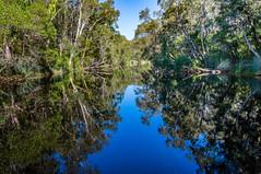 Upper Noosa River Reflections (Scottmh) Tags: 2016 australia nikon d7100 evergaldes heads holiday kin mirror noosa queensland river spring travel upper water australian native bush vegetation blue clouds