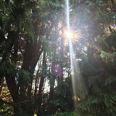 Sun through the trees. #sun #trees #ireland #bored #shine #worldPhotographyDay (AlanMc69) Tags: tree iphone shine sun instagramapp square squareformat iphoneography