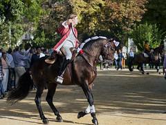 Rejoneador IV (EDU S.G.) Tags: caballo jinete horseman jockey rider horse rejoneador toros corrida espaa andalucia andalusia spain nikon nikkor d300 jaen feria fair