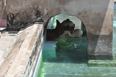 taman sari 027 (raqib) Tags: tamansari jogja jogjakarta yogyakarta yogjakarta indonesia bath bathhouse royalbathhouse palace kraton keraton sultan