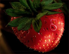 Madura Y Dulce /  Ripe And Sweet (Konny D.) Tags: strawberry erdbeere fragola fraise fresa morango aardbei jordbr mansikka jordgubbe  froula fragum truskawka  klubnichnyy  ichigo  comi