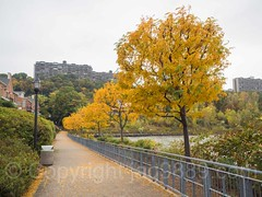 Hudson River Waterfront Walkway, Edgewater, New Jersey (jag9889) Tags: jag9889 usa foliage waterway edgewater outdoor 2016 bergencounty 20161020 tree hudsonriverwalkway hrww building walkway horizonapartments hudsonriver newjersey 07020 architecture autumn colors fall gardenstate house landscape nj river unitedstates unitedstatesofamerica water zip07020 us
