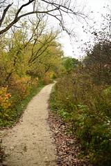 JJN_2888 (James J. Novotny) Tags: chicago conservatory botanical gardens garden flowers flower nikon d750 path paths skokie lagoons