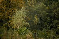 Generations (shaun.argent) Tags: woodland woods trees tree texture nature shaunargent seasons autumn flora forest grasses colour