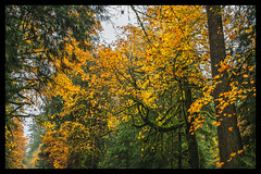 IMG_5837-Edit-Edit (bluecameraguy) Tags: canada canon5d canon 5d classic 5dc landscape vancouverisland bc cathedral grove fall