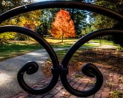 Fall Foliage (Tewmom) Tags: autumn foliage fall circle round outdoor