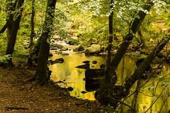 Golden water (Keith in Exeter) Tags: gold golden water river stream riverbank trees rocks reflection nature woodland landscape autumn outdoor riverteign devon england uk dartmoor nationalpark