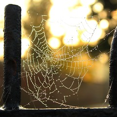 Beauty in unexpected places (Boudica_) Tags: beauty rain fence spider web cobweb dew raindrops railing