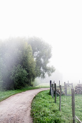 Chemin forestier sour la brume matinale