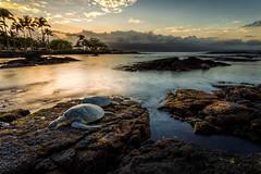 hilo hawaii turtles (fearthylamb) Tags: sunset landscape hawaii turtles