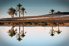 Palms (Mariasme) Tags: merzouga thesaharadesert morocco trees palms reflection water gamewinner challengeyouwinner