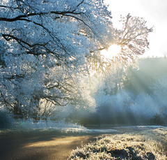 Frosty morning (trusler_james) Tags: road trees winter sun tree ice sunshine rural countryside frozen northampton frost december sony northamptonshire freezing sunny icy dslr sunrays hoar a350