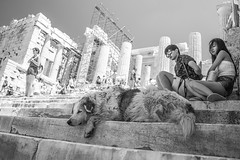 Ancient Dream (everybodyisone) Tags: old travel sky people bw dog monochrome stairs ancient place sony 28mm ruin kitlens tourist greece 28 acropolis 2870 ilce7