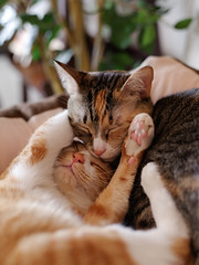 Irori Hiyori (rampx) Tags: cat pentax kittens neko   irori miaw hiyori 645z
