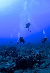 IMG_9786 (ScubaSchoolsofAmerica) Tags: travel america island saba sint scuba schools ssi poseidon maarten rebreather ccr ssa scubax