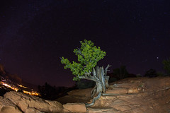 Twisted Sister (Rudy Malmquist) Tags: red arizona vortex mountains tree night energy rocks butte sedona twisted juniper
