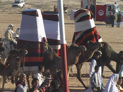 Tunisian Marriage Procession Camels
