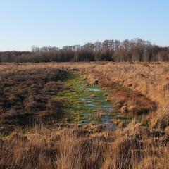 Westhay Moor, Somerset - December 2014. (Niall Oswald) Tags: england digital somerset moors levels wetland nationalnaturereserve somersetlevels westhaymoor fujix100