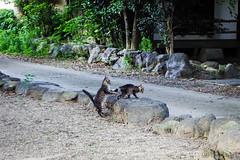 Today's Cat@2016-07-23 (masatsu) Tags: cat catspotting thebiggestgroupwithonlycats pentax mx1
