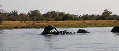 Elephant Play (www.mattprior.co.uk) Tags: adventure adventurer journey explore experience expedition safari africa southafrica botswana zimbabwe zambia overland nature animals lion crocodile zebra buffalo camp sleep elephant giraffe leopard sunrise sunset