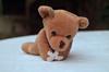 Osito (Sofia Camisassa) Tags: osos oso osito peluche toy profundidaddecampo animal animals nikon d5100 fotografia enfoque bear teddy focus pics