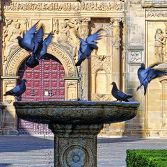Thirsty Pigeons (Artypixall) Tags: plaza urban church fountain spain dusk pigeons streetscene faa ubeda