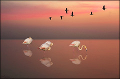 Reflejos al atardecer. (antoniocamero21) Tags: color atardecer agua foto sony delta paisaje aves flamencos