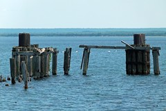 End of the Dock (PGK88) Tags: abandoned dock decay rot derelict posts pilings blue water harbor seascape